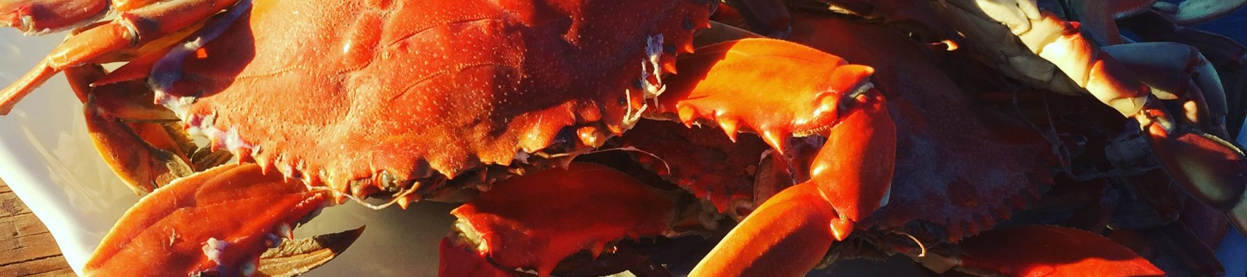 Blue Crabs from the Bargilya Lagoon